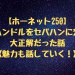 【ホーネット250】 純正ハンドルをセパハンに変えて 大正解だった話 〈魅力も話していく!〉
